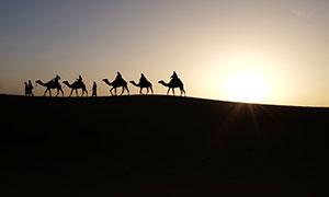夕阳下沙漠中行走的驼队摄影图片