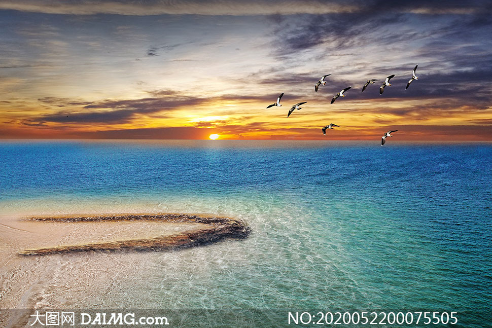 夕阳下的海洋和海鸥高清摄影图片