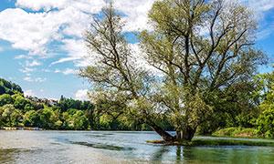 蓝天白云下湖泊中的大树摄影图片