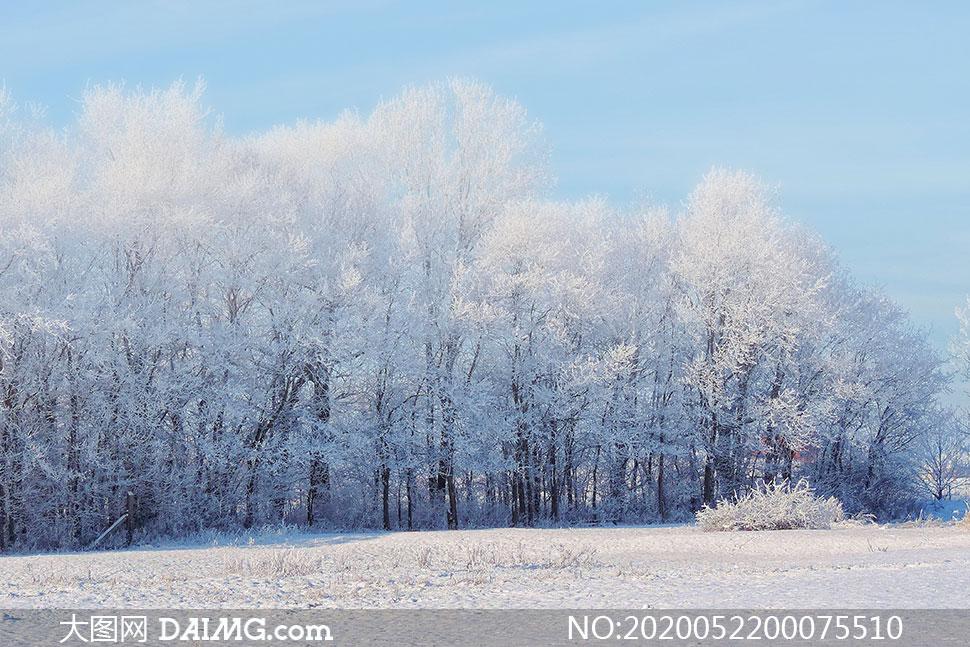冬季树上的雪后积雪摄影图片