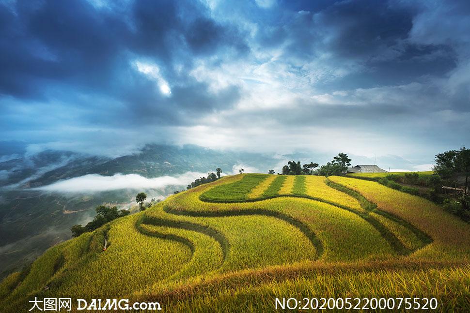 乌云下的梯田农作物摄影图片