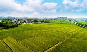 村庄外的农田航拍图摄影图片