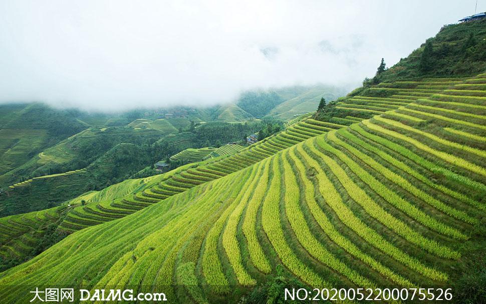 大山坡上的美丽梯田摄影图片