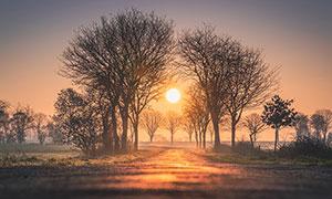夕阳下的大树高清摄影图片