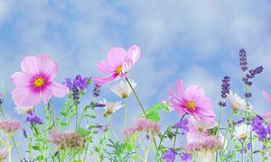 小清新风格的野花摄影图片