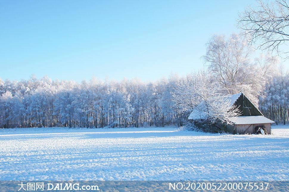 冬季雪后树林和小屋高清摄影图片