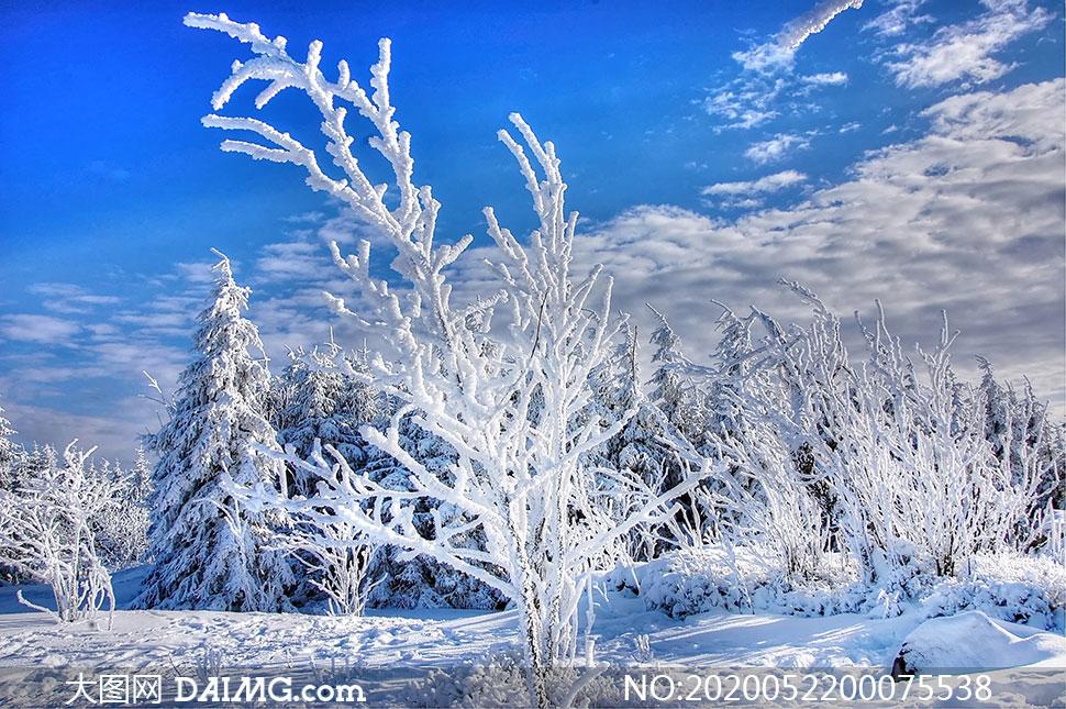 冬季雪后森林美景高清摄影图片