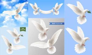 潔白如雪的和平鴿主題設計矢量素材
