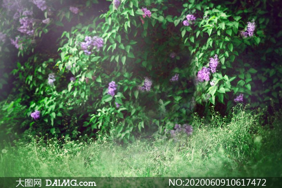 青草与紫色的花朵主题影楼摄影背景