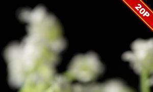 鲜花青草元素装饰后期适用高清图片