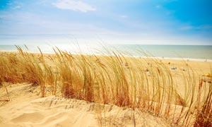 蓝天下的海边沙滩和草丛高清摄影图片