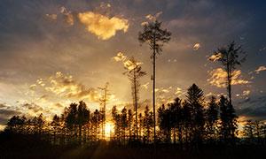 夕阳下的森林剪影摄影图片