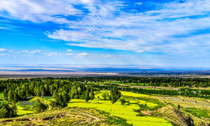 蓝天白云下的田园油菜花地摄影图片