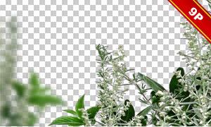 綠葉鮮花裝飾邊框設計免摳圖片素材