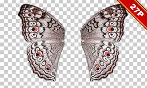 飛舞的蝴蝶后期合成適用高清圖片V01