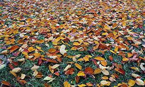 草地上飘落的树叶摄影图片