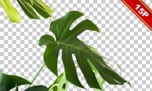 热带植物绿叶主题图层叠加素材集V01