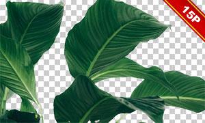 热带植物绿叶主题图层叠加素材集V02