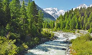 山谷中的树木和小溪摄影图片