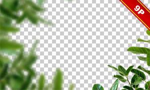 绿叶花朵前景装饰元素适用高清图片