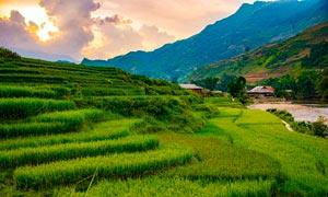 夕阳下的梯田和稻田摄影图片