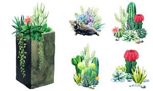 仙人掌等水彩风格质感植物矢量素材