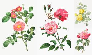 质感效果花朵植物主题设计矢量素材