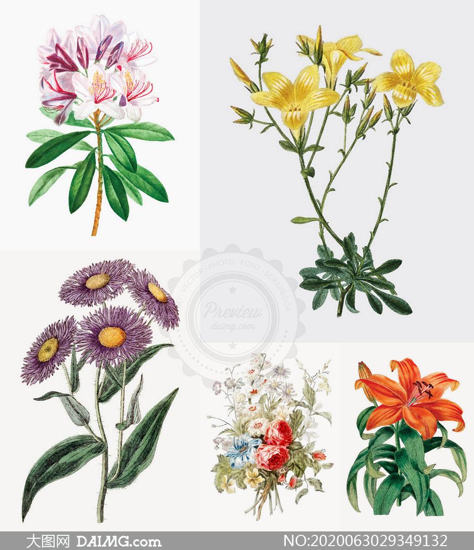 百合花与菊花等花卉植物主题矢量图