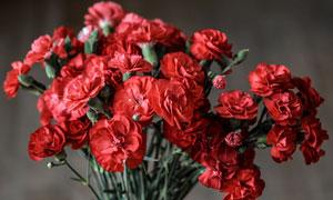 花瓶中的红色康乃馨摄影图片