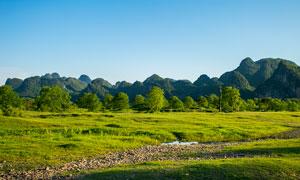 桂林乌桕滩春季美景摄影图片