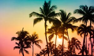 夕阳下椰树林剪影摄影图片