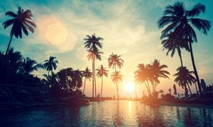 夕阳下的游泳池和椰树摄影图片