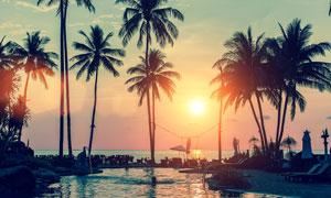 落日下的游泳池和椰树摄影图片