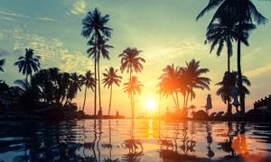傍晚游泳池和椰树剪影摄影图片