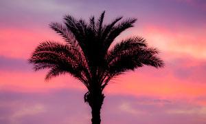 傍晚椰子树剪影高清摄影图片