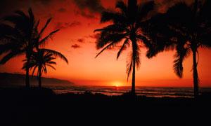 傍晚海边椰树剪影高清摄影图片