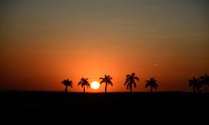 夕阳下的椰子树剪影高清摄影图片