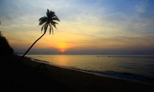 落日下海边椰树剪影高清摄影图片