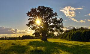 夕阳下的大树和草地高清摄影图片