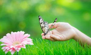 鮮花與手上的一只蝴蝶攝影高清圖片