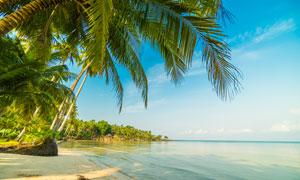 大海边茂密的椰树风光摄影高清图片