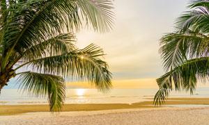 夕阳西下晚霞中的海滩风光高清图片