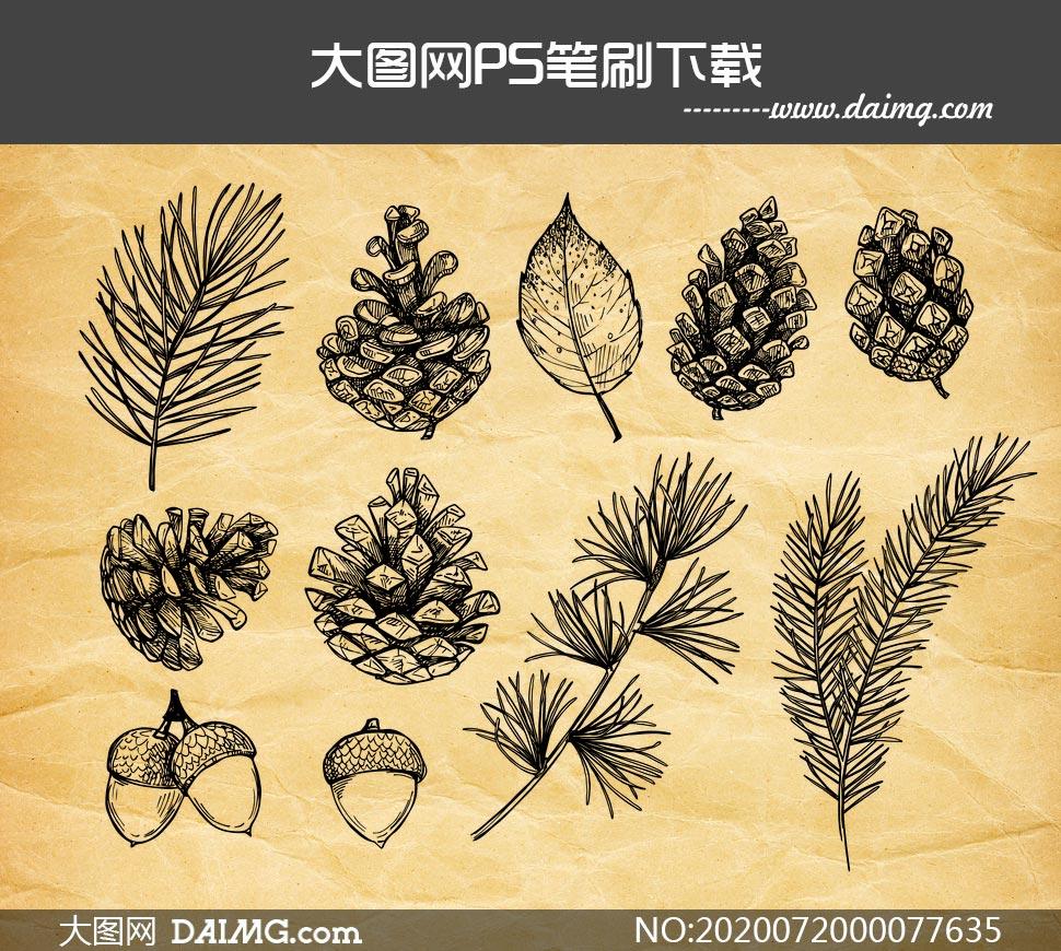 手绘植物叶子和松果PS笔刷如何使用