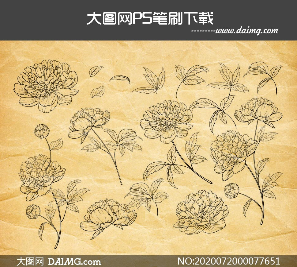 线描花朵和叶子PS笔刷效果如何