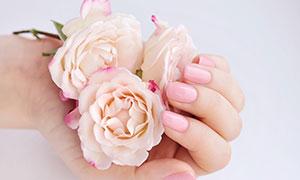 在手中的几朵鲜花特写摄影高清图片