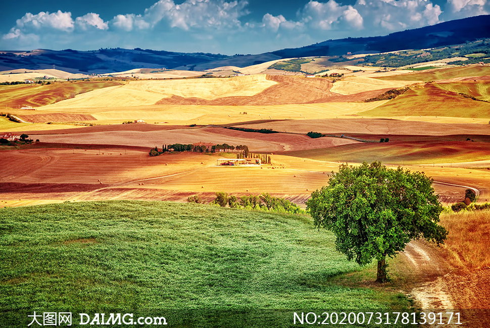 大树草地与连绵的山峦摄影高清图片