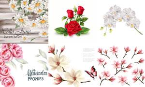 菊花玫瑰花等水彩花朵主题矢量素材