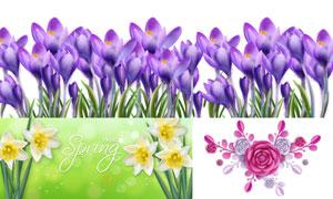 番红花与水仙花等花卉植物矢量素材
