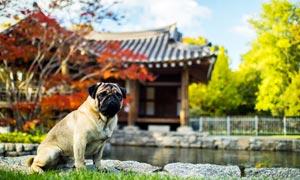 在公園里坐著的寵物狗攝影圖片