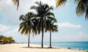 海边沙滩上的椰树摄影图片